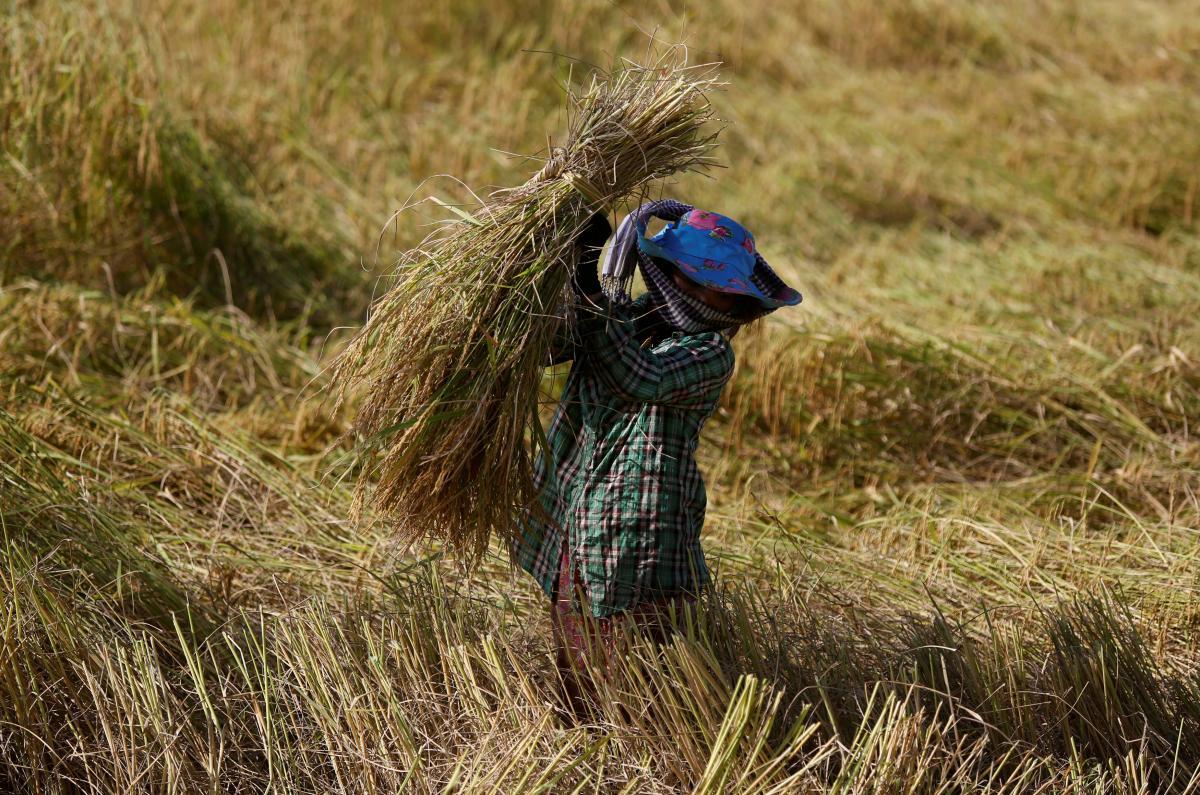 EU set to impose tariffs on Cambodia, Myanmar rice imports - The